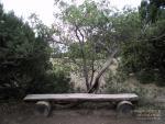 Скамейка в можжевеловой роще